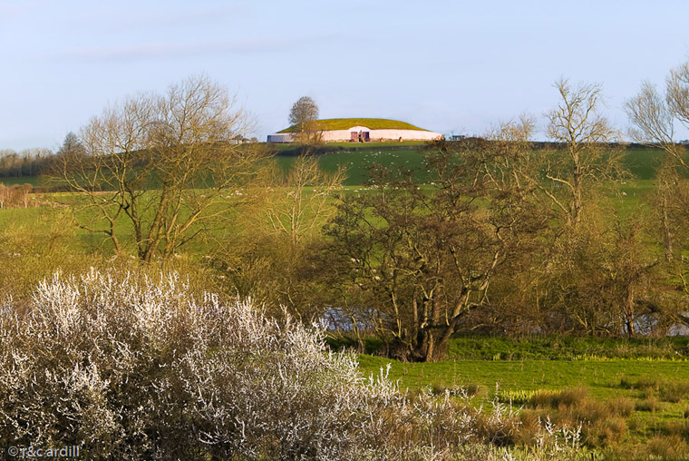 Newgrange on an early spring morning with white hawthorn blossoms at the Boyne