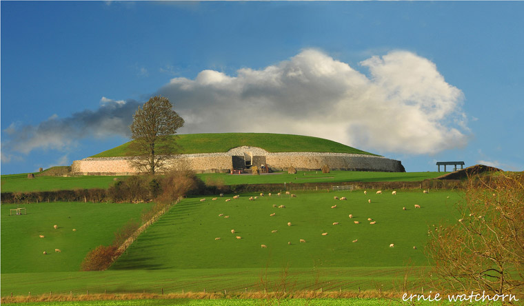 Newgrange Sheep